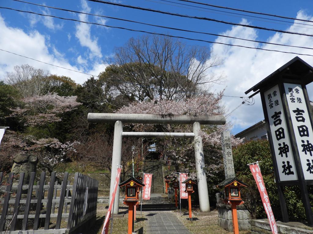 令和2年 ソメイヨシノと八重桜